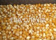 Услуги сушки зерна: кукурузы,  сои,  подсолнуха,  рапса