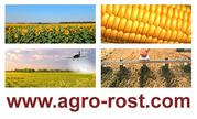 Семена кукурузы и семена подсолнечника оптом и в розницу